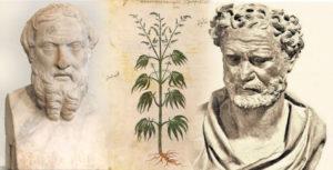 Η κάνναβη στον Ηρόδοτο και το Δημόκριτο