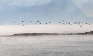 «Βράζει» η θάλασσα στο Ναύπλιο – Συναρπαστικές εικόνες – Που οφείλεται το φαινόμενο