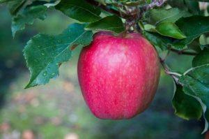 Ξέρετε ποιο φρούτο είναι η καλύτερη φυσική οδοντόκρεμα;
