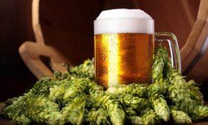 Λυκίσκος: Το θαυματουργό συστατικό της μπύρας που σκοτώνει καρκίνους