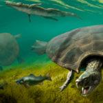 Χελώνα σε μέγεθος αυτοκινήτου! Βρέθηκαν απολιθώματά της στη Νότια Αμερική