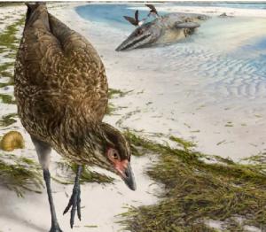 Αστεριόρνις: Βρέθηκε στο Βέλγιο το αρχαιότερο απολίθωμα πουλιού