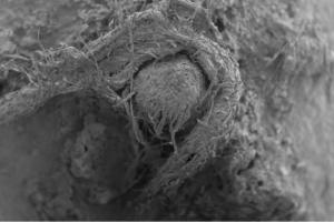 Ανακαλύφθηκε σχοινί 50.000 ετών που είχαν φτιάξει Νεάτερνταλ!