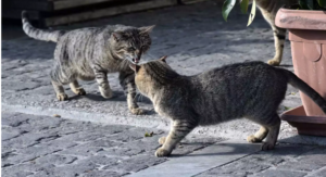 Ένας σκύλος και τρεις γάτες μολύνθηκαν από κορονοϊό στην Ολλανδία!