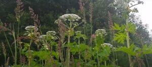 Εικόνες ΣΟΚ: Το επικίνδυνο φυτό που αναπτύχθηκε εν μέσω καραντίνας – Tι έπαθαν όσοι το άγγιξαν (ΦΩΤΟ)