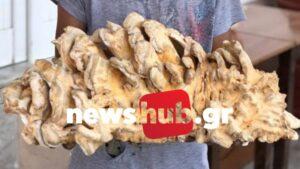 Ηράκλειο: Πιτσιρικάς ανακάλυψε ένα σπάνιο μανιτάρι - γίγα 5 κιλών