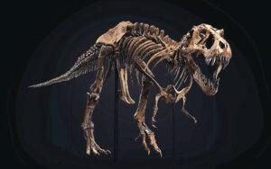 Ενας T Rex βγαίνει στο σφυρί