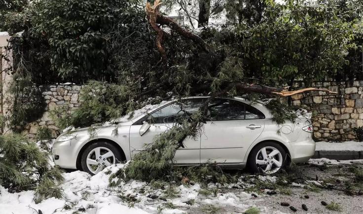 Κακοκαιρία Μήδεια: Αυτό το χιόνι ήταν διαφορετικό – Γιατί έπεσαν εκατοντάδες δέντρα