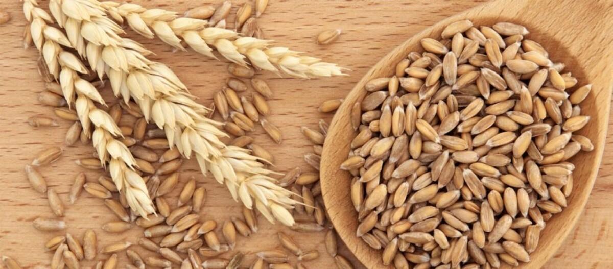 Γιατί οι Αρχαίοι Έλληνες δεν έτρωγαν ποτέ σιτάρι;